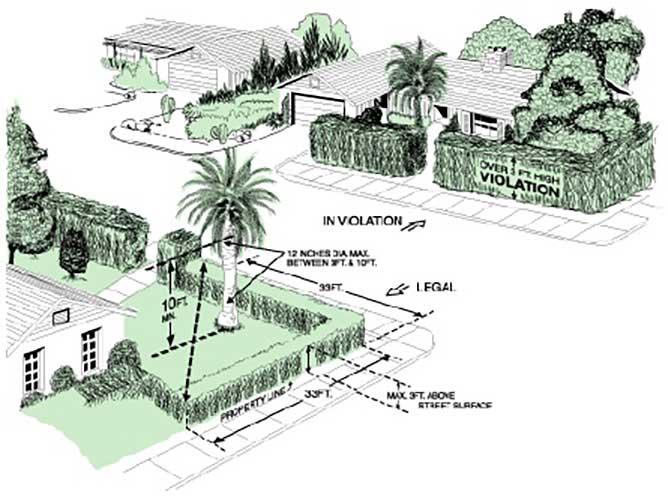 Phoenix Metropolitan Area Municipal Tree Code