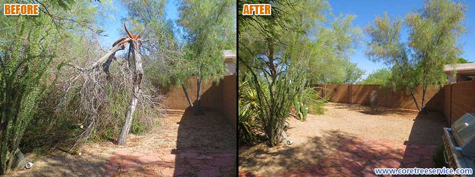 Before & After, Acacia tree breaks after Monsoon in Cave Creek, 85331