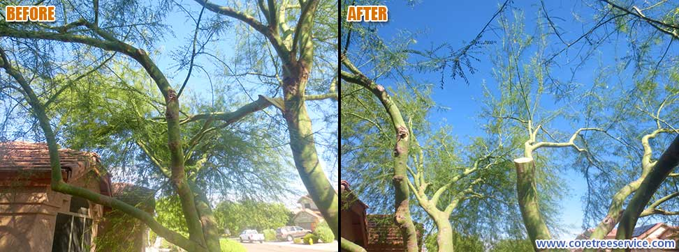 Before & After, Large Palo Verde branch breaks in Desert Ridge, 85050
