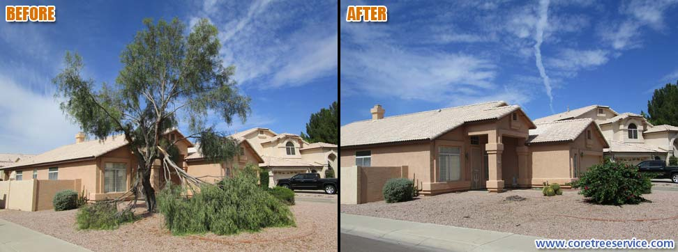 Before & After, Acacia tree storm damage in Goodyear, 85395