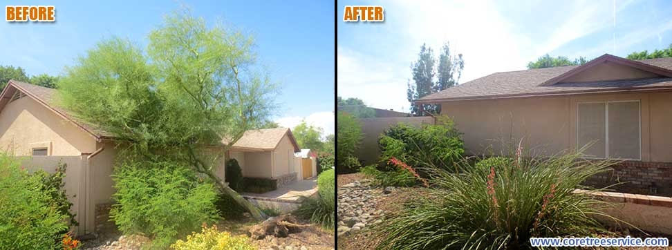 Before & After, Palo Verde tree falls after dust storm in Waddell, 85355