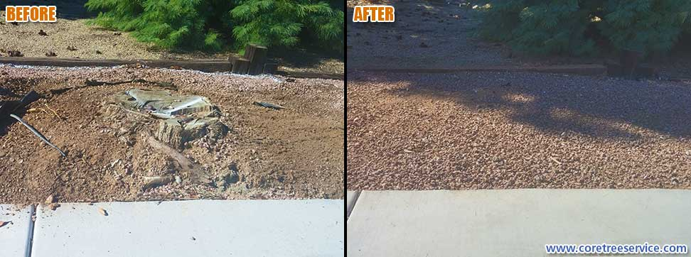 Before & After, stump grinding a Pine tree stump in Phoenix, 85053
