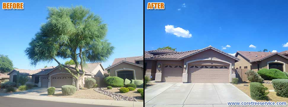 Before & After, removal of a large Palo Verde tree in Cave Creek, 85331