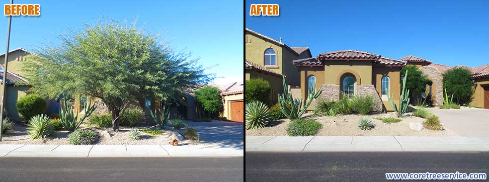Before & After, removal of a Mesquite tree in Phoenix, 85050