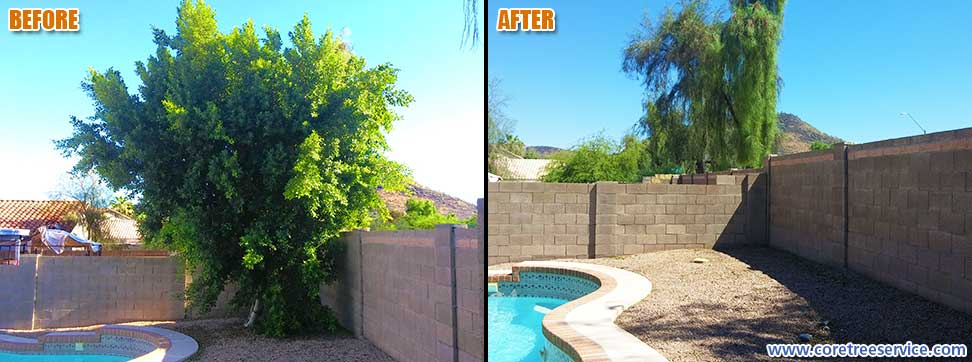 Before & After, removal of a Ficus tree in Glendale, 85308