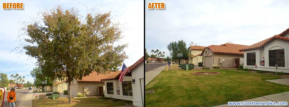 Before & After, removal of a Chinese Elm in Glendale, 85308
