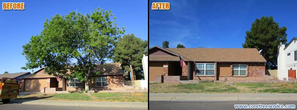 Before & After, removal of one Ash tree in Glendale, 85304