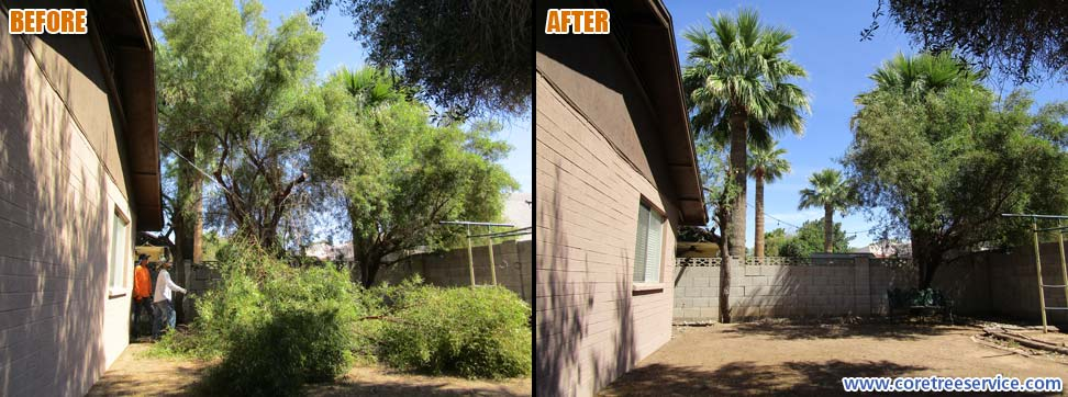 Before & After, removal of a Sumac tree in Glendale, 85302