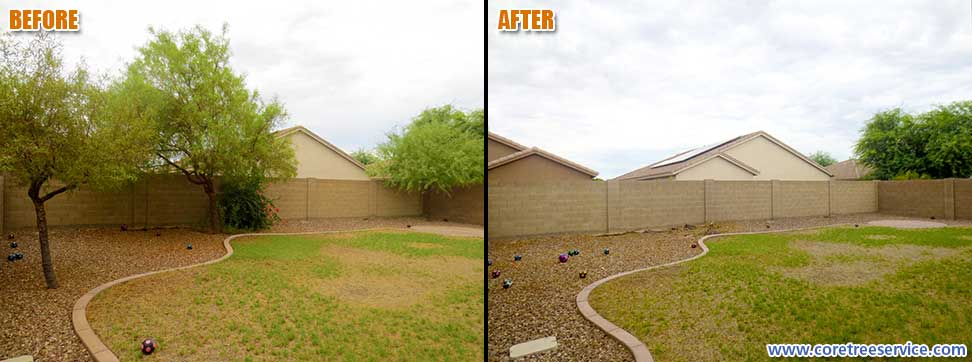 Before & After, removal of 2 African Sumac Trees & 1 Mesquite Tree in Peoria, 85383