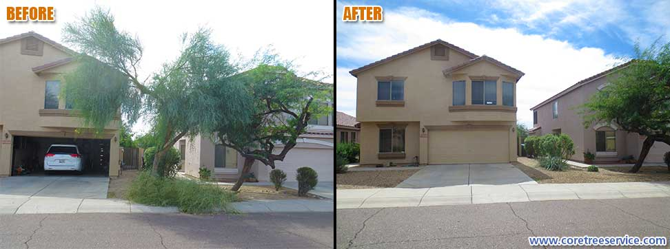 Before & After, removal of a Palo Verde tree in Phoenix, 85024