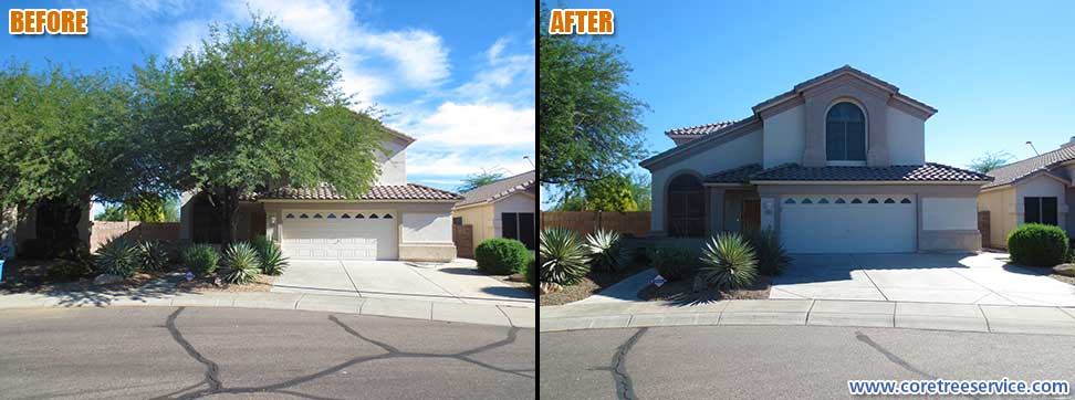 Before & After, removal of a Mesquite tree in Phoenix, 85024