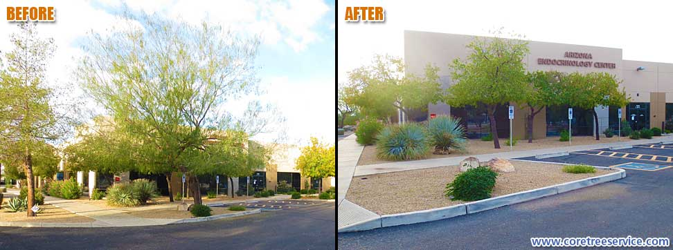 Before & After, removal of a Honey Mesquite tree in Phoenix, 85053