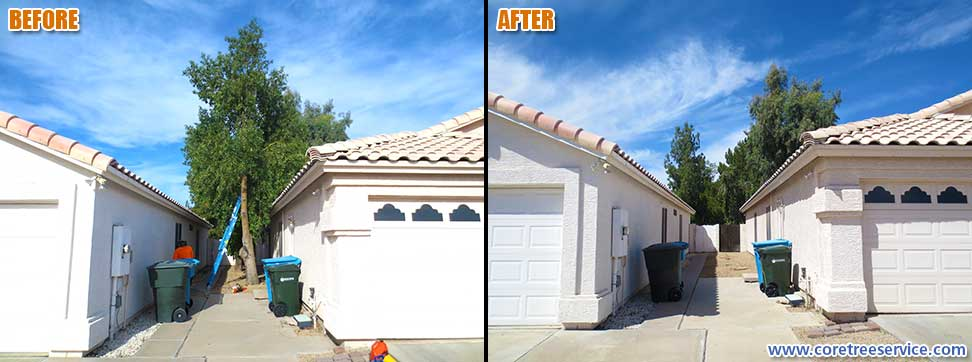 Before & After, removal of 2 Australian Bottle trees in Phoenix, 85032