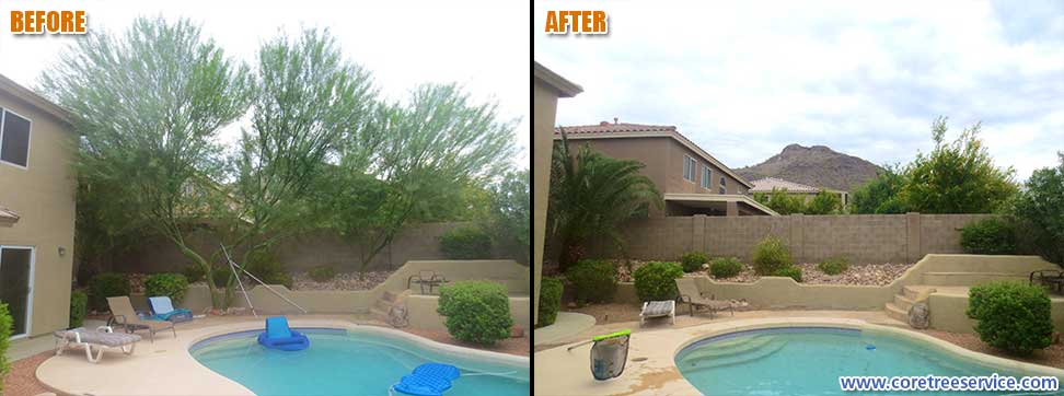 Before & After, removal of 2 Palo Verde trees in Phoenix, 85083