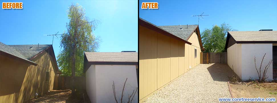 Before & After, removal of 3 Australian Bottle Trees In Phoenix, 85027