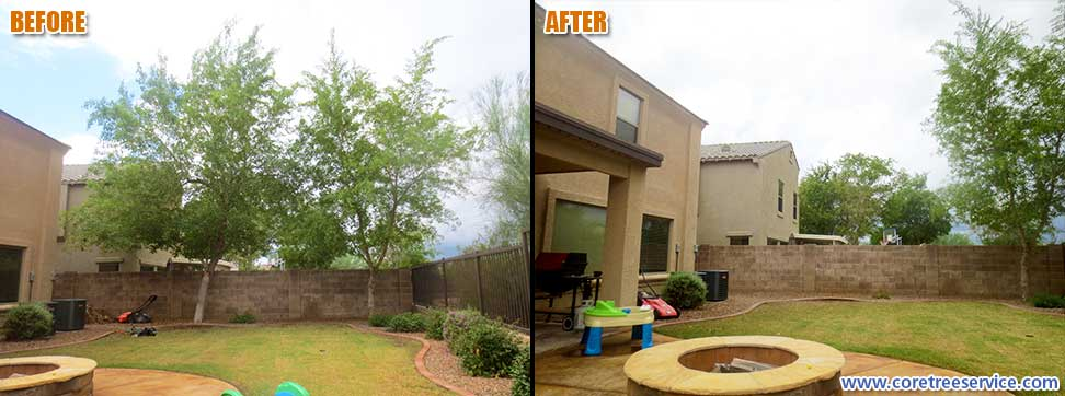 Before & After, removal of an Indian Rosewood Tree In Phoenix, 85024