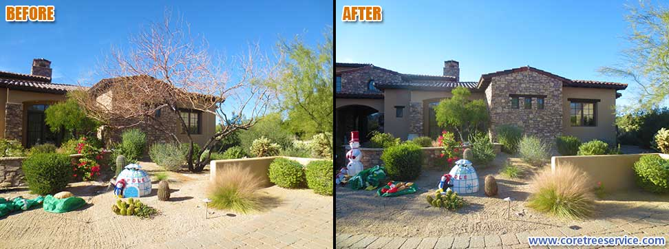Before & After, removal of a dead Mesquite tree in Scottsdale, 85255