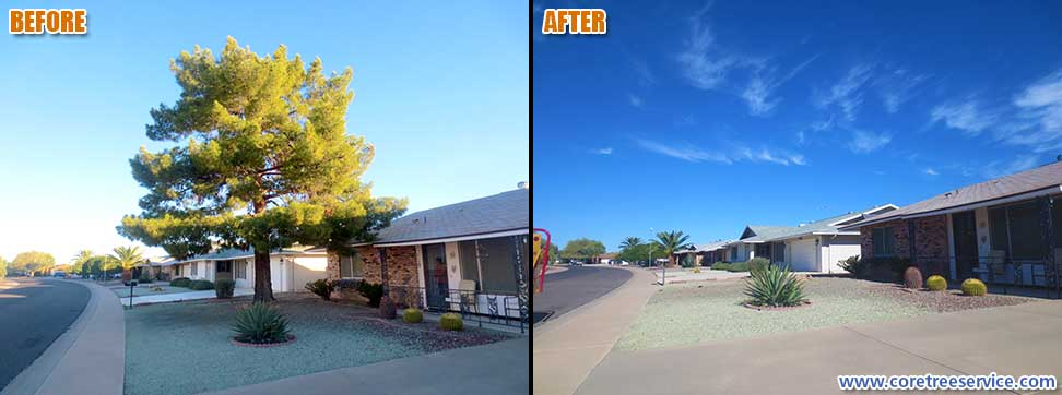 Before & After, removal of a Pine tree in Sun City, 85373