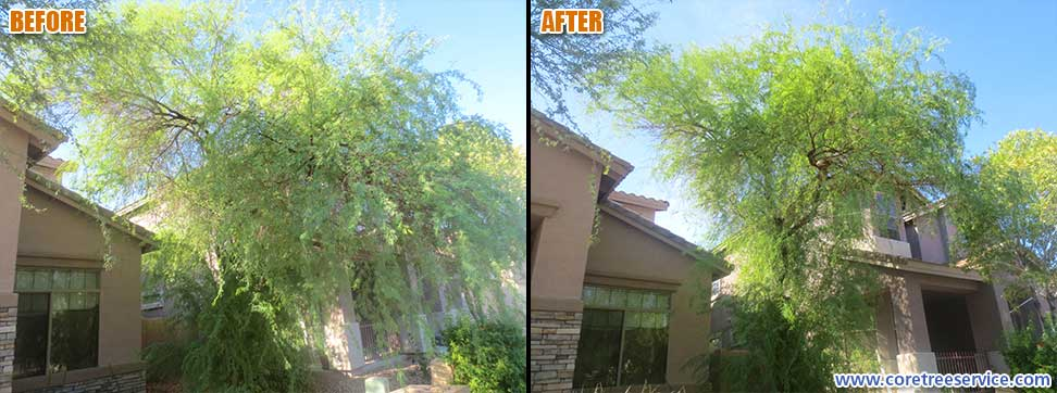 Before & After, trimming & an Acacia tree in Anthem, 85086