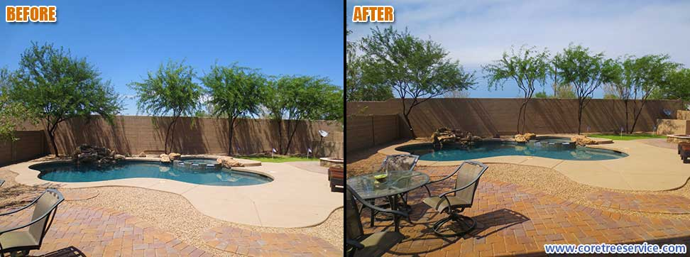 Before & After, line of five Mesquite and Acacia trees in Desert Ridge, 85050