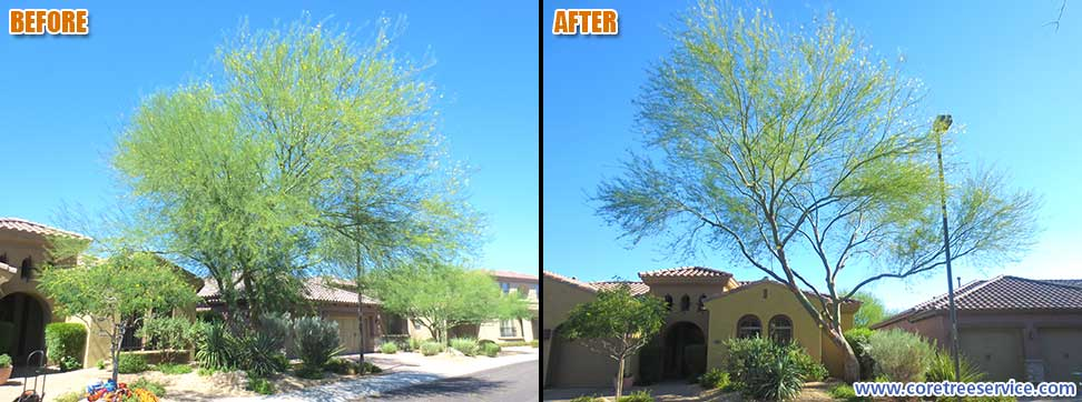 Before & After, Palo Verde tree in Desert Ridge, 85050