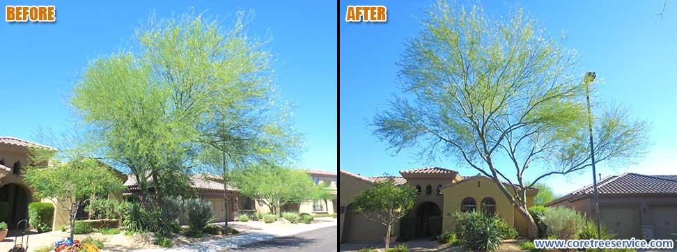 Before After Palo Verde Tree In Desert Ridge 85050