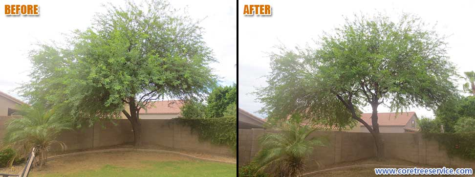 Before & After, trimming & thinning a hybrid Mesquite tree in Glendale, 85308