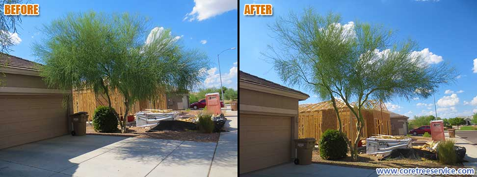 Before After T A Palo Verde Tree In Peoria 85383