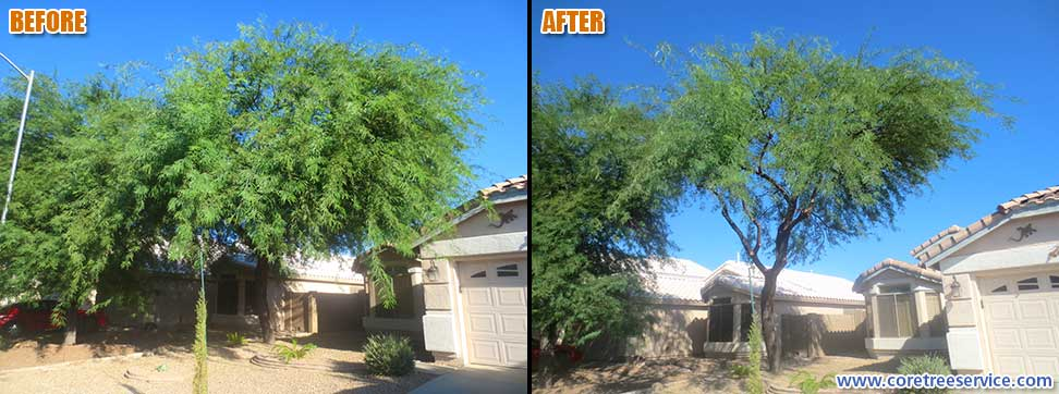 Before & After, significant cut back on a Mesquite tree in Peoria, 85382