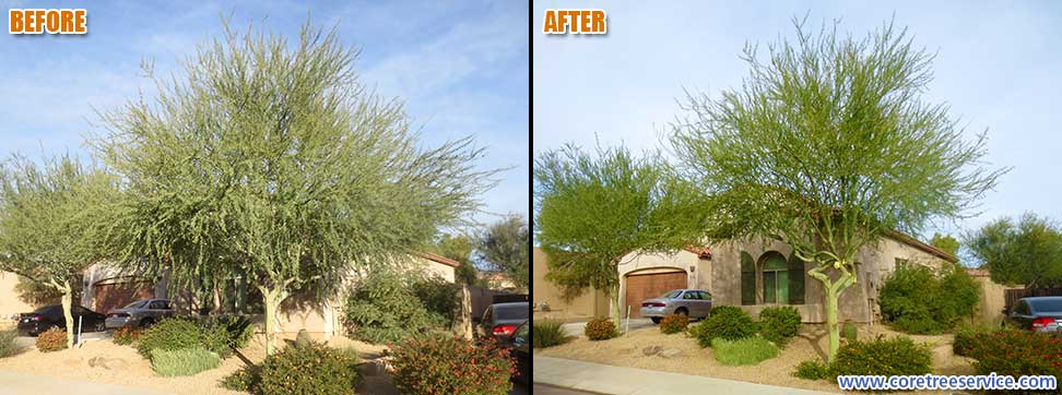 Before & After, Palo Brea tree in Peoria, 85383