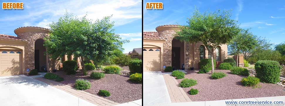 Before & After, trimming an Indian Rosewood tree in Phoenix, 85024