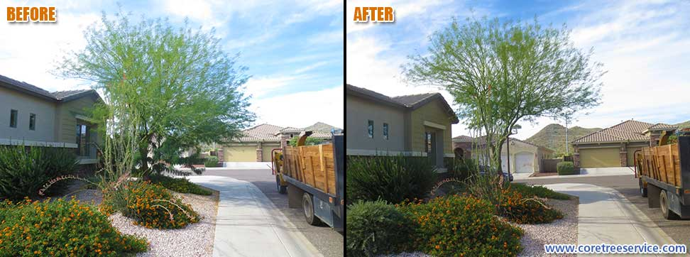 Before & After, trimming a Palo Verde tree in Phoenix, 85024