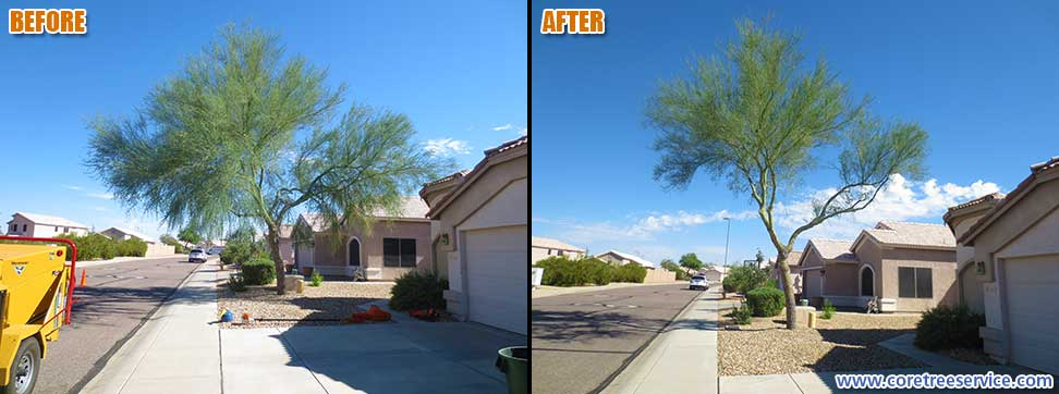 Before & After, trimming a Palo Verde tree growing over road and roof in Phoenix, 85024