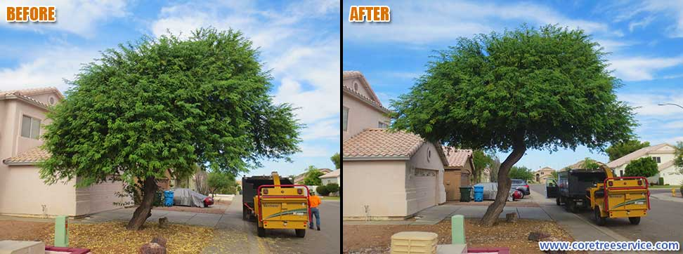 Before & After, trimming the bottom of a Mesquite Tree in Phoenix, 85050
