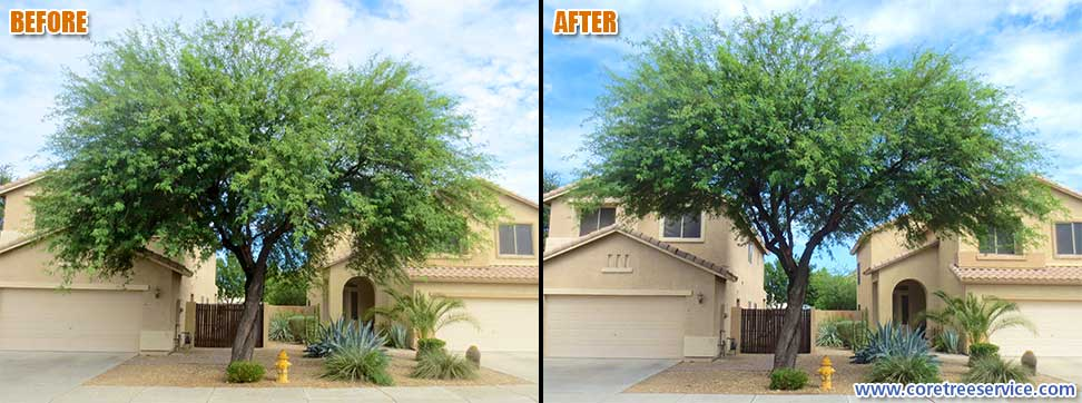 Before & After, trimming a Mesquite Tree in Phoenix, 85083