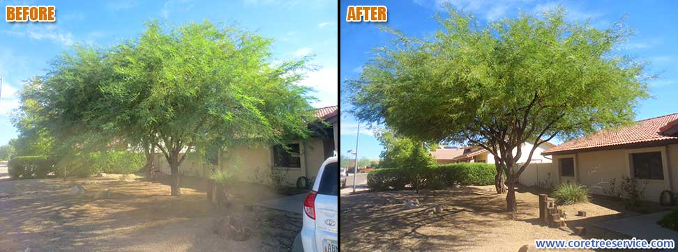 Before & After, trimming 2 Mesquite Trees in Phoenix, 85032